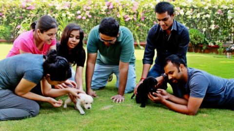 Symbiosis Bangalore students can now put a 'paws' on stress!